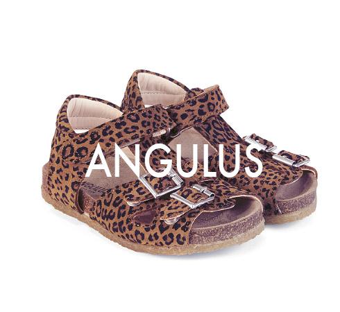 Angulus_490x450